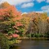 Julian Price Lake Shore In Fall - North Carolina