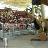 Jungle Island Cassowary