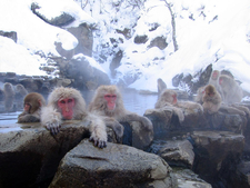 Macaques Enjoying An Onsen In Jigokudani Monkey Park