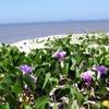 Beaches Vegetation