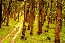 Kabini Jungle
