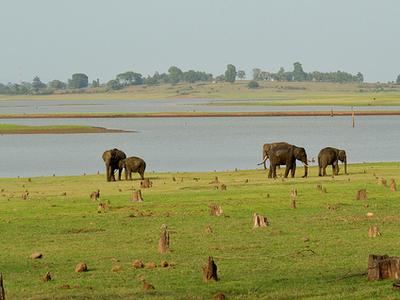 Kabini Reservoir - Nagarhole
