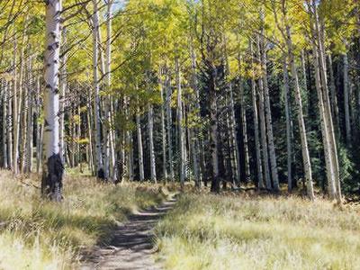 Kachina Trail Fall Colors