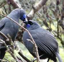 Kaharoa Conservation Area - North Island - New Zealand