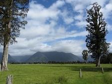 Kahikatea Pasture @ Tai Poutini NP - South Island NZ
