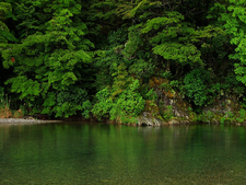 Kaimanawa Forest Park - Tongariro National Park - New Zealand