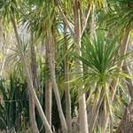 Kaituna Wetland