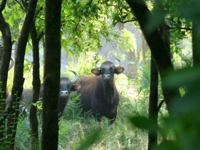 Kanha National Park - Fauna