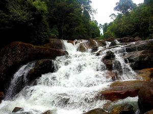 Kanneliya Rainforest Tour Photos