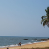Kappad Beach Tree.