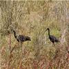Karera Bird Sanctuary