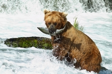 Katmai Brooks Falls