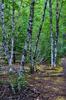 Kautz Creek Trails