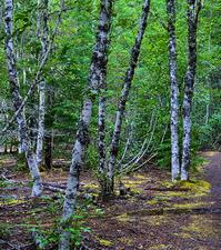 Ground indio Henry Kautz Hunting Creek a través de