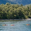 Kayaks - Milford Sound - Southland NZ