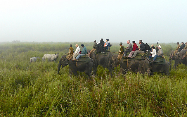 Assam Wildlife Tours 4 Days Photos