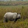 Guwahati - Kaziranga Wildlife Sanctuary Tour Package
