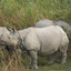 Parque Nacional de Kaziranga