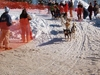 Kearney  Dog  Sled  Race