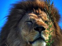 Kenya Festive Season 10 Days Safari