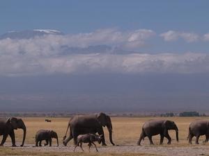 14 Days - Best of Kenya Safari Photos