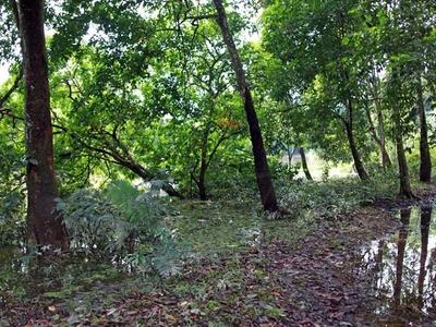 Kerumutan Forest Reserve - View
