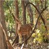 Kheoni Wildlife Sanctuary
