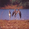 Khijadiya-Bird-Sanctuary-Gujarat