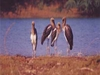 Khijadiya-Bird-Sanctuary-Gujarat