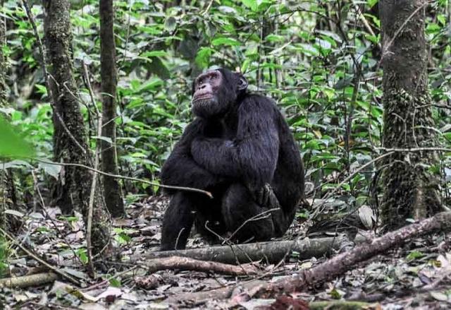 11 Day Gorilla and Chimpanzee Experience Photos