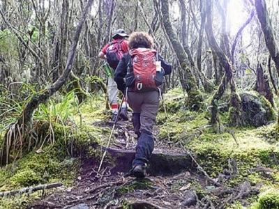 Kilimanjaro Trek Near Umbwe Cave Camp - Tanzania