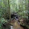 Kinabalu Jungle Stream