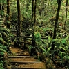 Kinabalu Park - Area