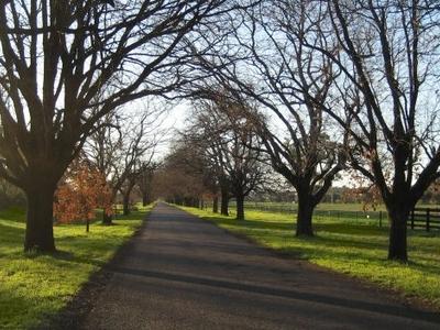 King George Avenue Near The Peel River