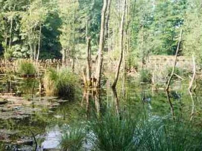 Mons Klint: A Pond In The Klinteskov Woods