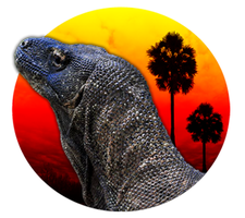 Komodo Island Trips
