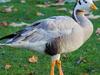 Koonthankulam Bird Sanctury Tirunelveli