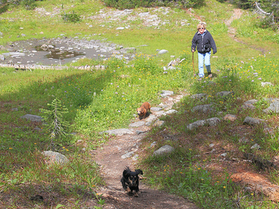 Kootenai Lakes Trail - Glacier - Montana - USA