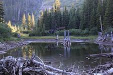 Kootenai Lakes Trail Views - Glacier - Montana - USA