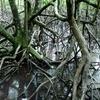 Kota Kinabalu City Bird Sanctuary - View