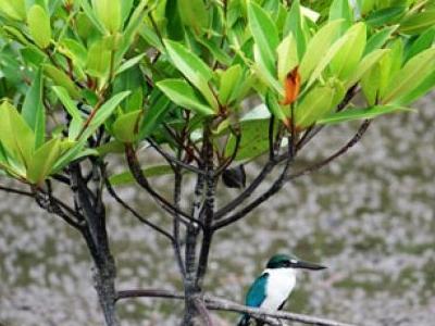 Kota Kinabalu Wetlands