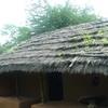 Kota Tribe House