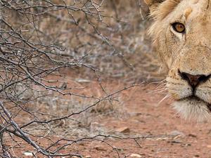 Bush Walk - Kruger National Park Photos