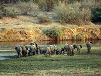 Kruger & Sabi Sands Essential Safari