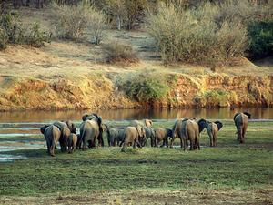 Kruger & Sabi Sands Essential Safari Photos