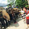 Kuala Gandah Elephant Orphanage Sanctuary - View