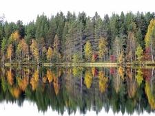 Kuusamo Autumn View - Lapland - Finland
