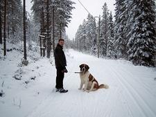 Kuusamo Forest Nature Walk In Finland