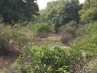 Kaboré Tambi Parque Nacional