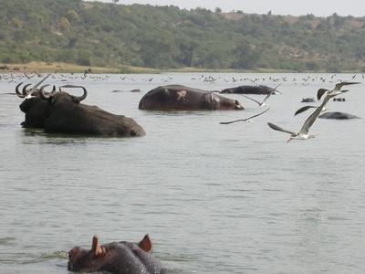 Kazinga Channel  Uganda
